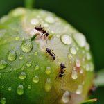 Jak skutecznie pozbyć się mrówek z ogrodu?