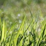 Kiedy i jak siać trawę?
