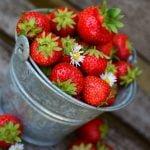 Jak prawidłowo sadzić truskawki?
